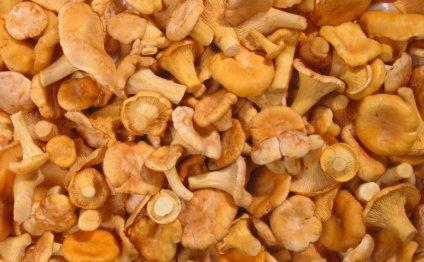 Сушить грибы лисички