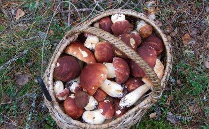 Как правильно жарить грибы