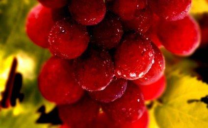 Как приготовить вино из